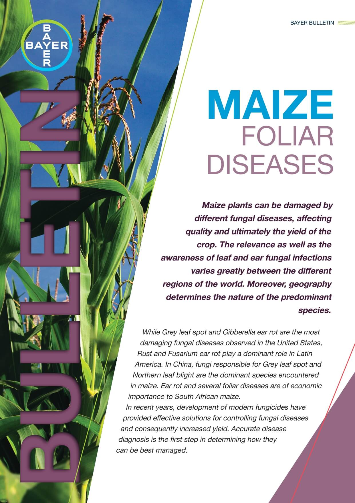 Maize - Foliar Diseases