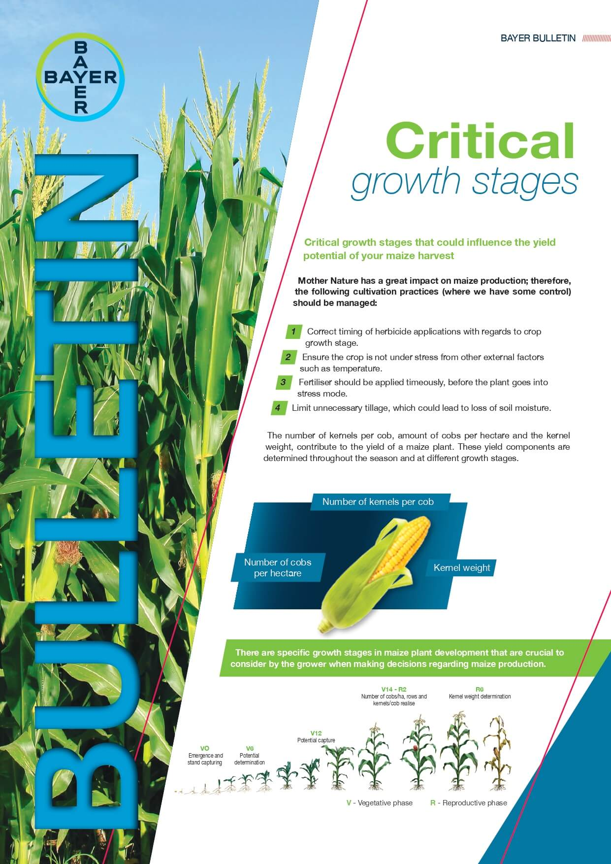 Maize - Critical Growth Stages